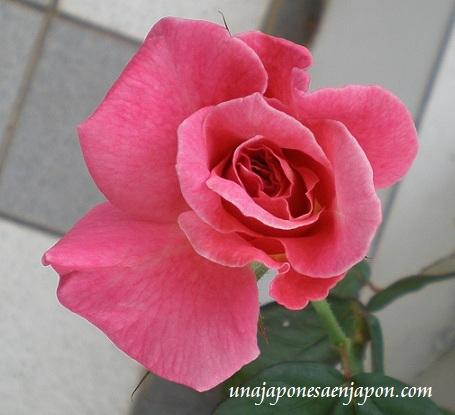 rosa gracias arigatou unajaponesaenjapon.com