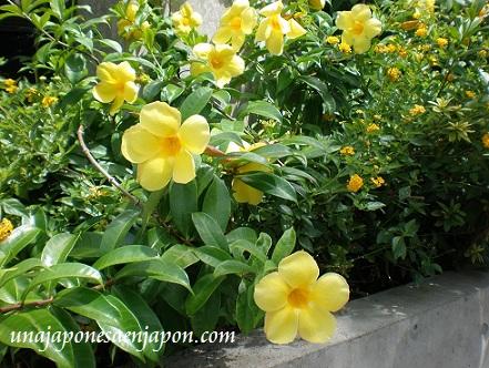 flores okinawa japon unajapoesaenjapon.com