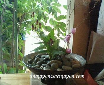 publicar sin permiso unajaponesaenjapon.com
