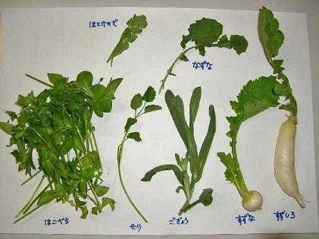 siete hierbas de primavera japon 1 unajaponesaenjapon.com