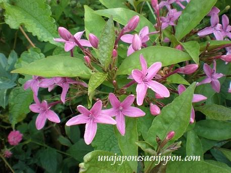 flor unajaponesaenjapon.com