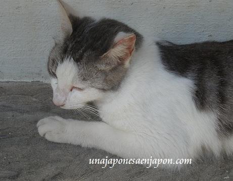 gato neko lengua de gato nekozita japon