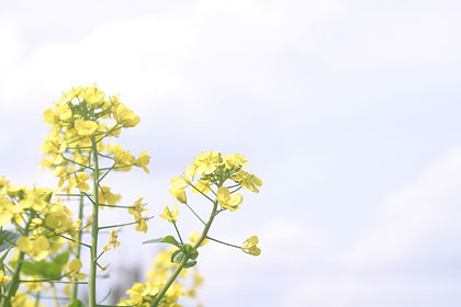 flor japon unajaponesaenjapon.com