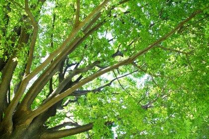 verde japon unajponesaenjapon.com