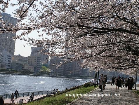 sakura hanami cerezo en flor tokyo japon