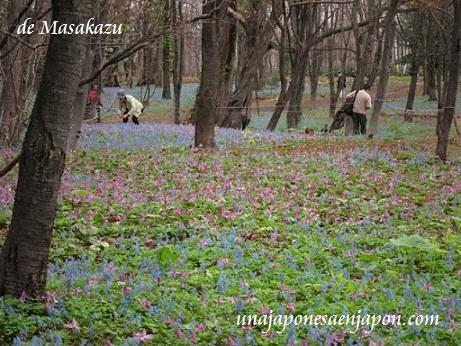 hokkaido japon2 unajaponesaenjapon.com