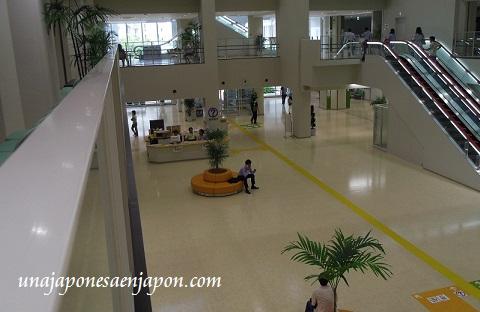 ayuntamiento de naha okinawa japon ecologia 6