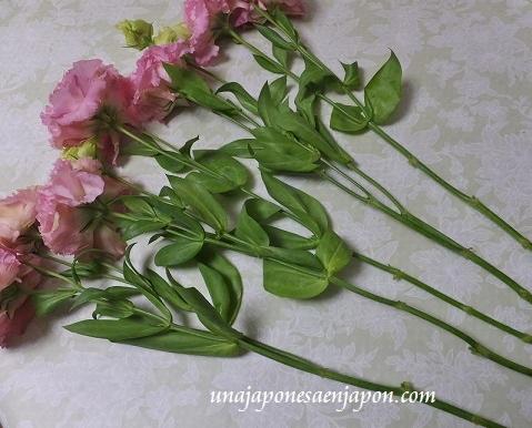 flores kikyo okinawa japon 1