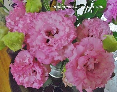 flores kikyo okinawa japon 2