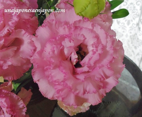 flores kikyo okinawa japon 3