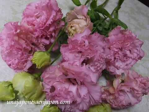 flores kikyo okinawa japon