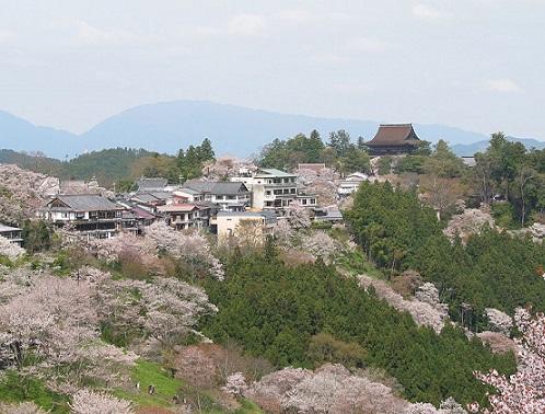sakura monte yoshino nara mil sakuras japon