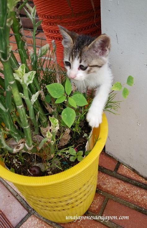 barrio-de-los-gatos-naha-okinawa-japon