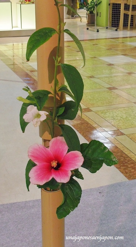 ceremonia de te matcha okinawa japon 4