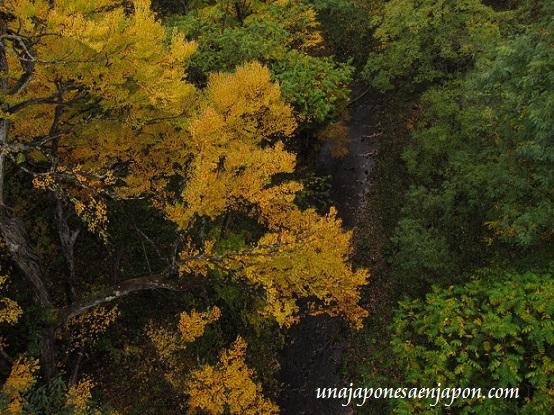 hojas rojas kouyou hokkaido japon 5