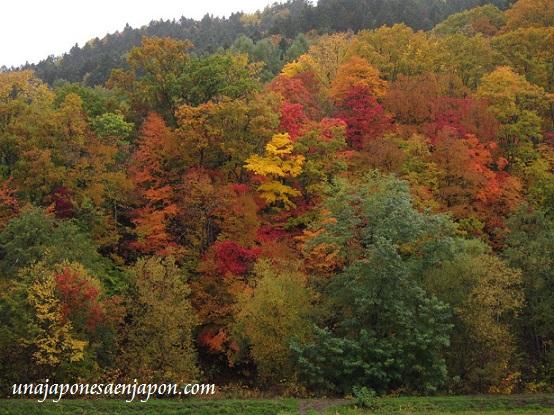 hojas rojas kouyou hokkaido japon 6