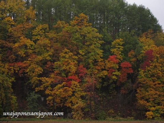 hojas rojas kouyou hokkaido japon 7