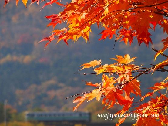 hojas-rojas-kouyou-hokkaido-japon