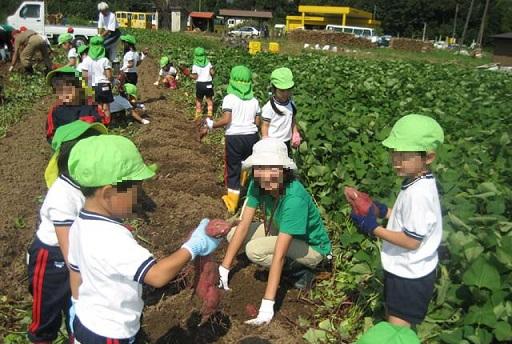 recoleccion de batatas boniato cosecha escuela japon 1