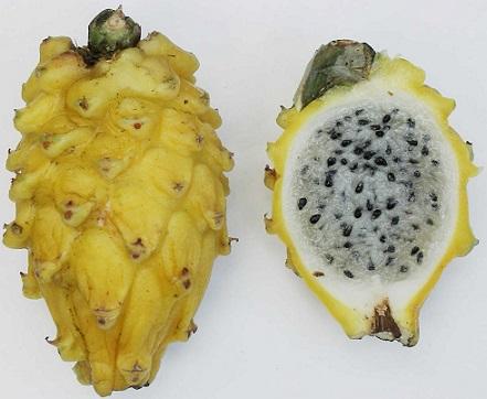 fruta del dragon Pitahaya 7