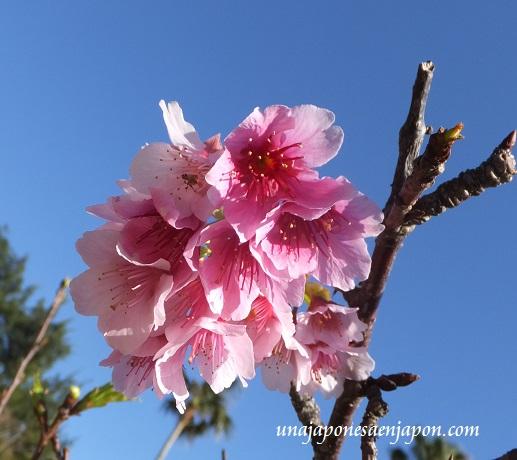 sakura flores cerezo 2016 japon 1
