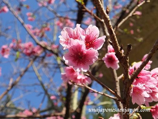 sakura flores cerezo 2016 japon 3