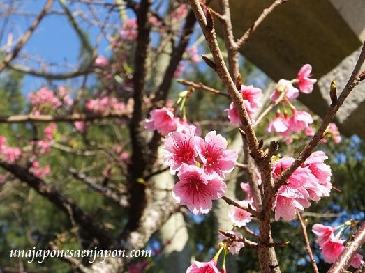 sakura flores cerezo 2016 japon 5