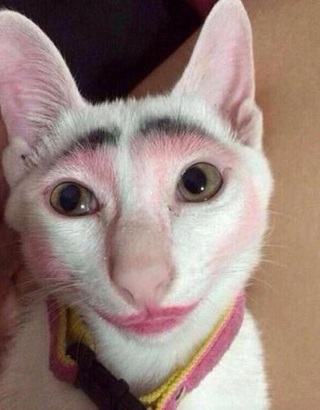 gato maquillado