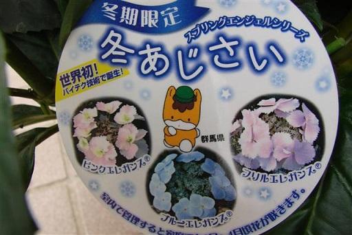 hortensia de invierno fuyu ajisai japon