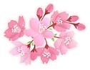 marzo japon sakura