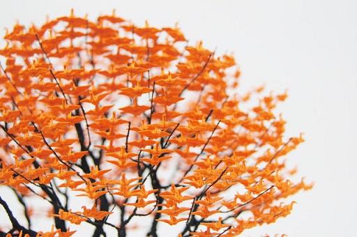 origami grullas de papel onogawa naoki japon 4