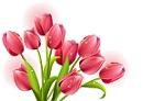abril japon tulipan