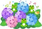junio japon ajisai hortensia