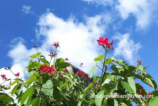 parque-memorial-de-la-paz-itoman-23-de-junio-okinawa-japon