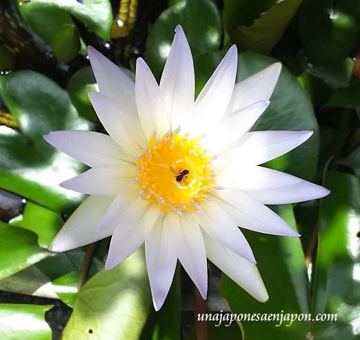 flor-con-su-amiguita-okinawa-japon