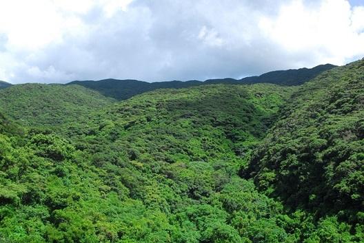 bosque-selva-de-yanbaru-okinawa-japon-1