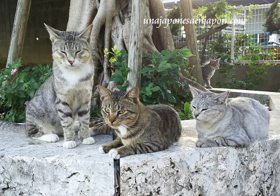 gatos-neko-okinawa-12-fotos-2016-japon.