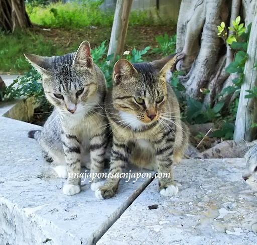 dia-de-los-gatos-22-de-febrero-japon.